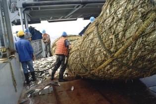Рыбацкая отрасль в Приморье получит 17 млрд рублей инвестиций