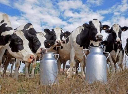 Приморское молоко на экспорт в Китай