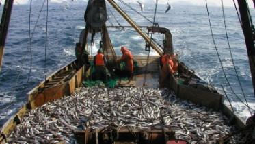 Подписан закон о введении инвестиционных квот для развития рыбохозяйственной отрасли