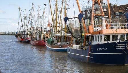 О рыбной бирже