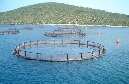 В Приморье будет морская ферма
