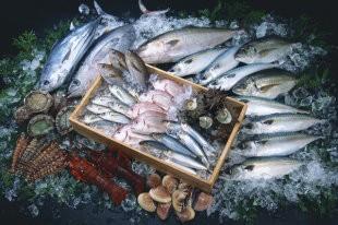 Рыбный хаб планируют построить в Приморье