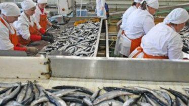 Китайцы хотят рыбачить в Приморье
