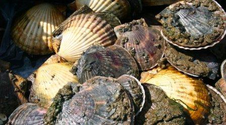 9,5 млрд рублей инвестируют в морской огород