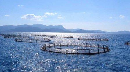 46 участков для разведения аквакультуры