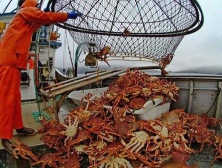 Рыбаки Приморья увеличили добычу краба